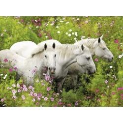 Paarden in veld van bloemen 300st xl  Ravensburger